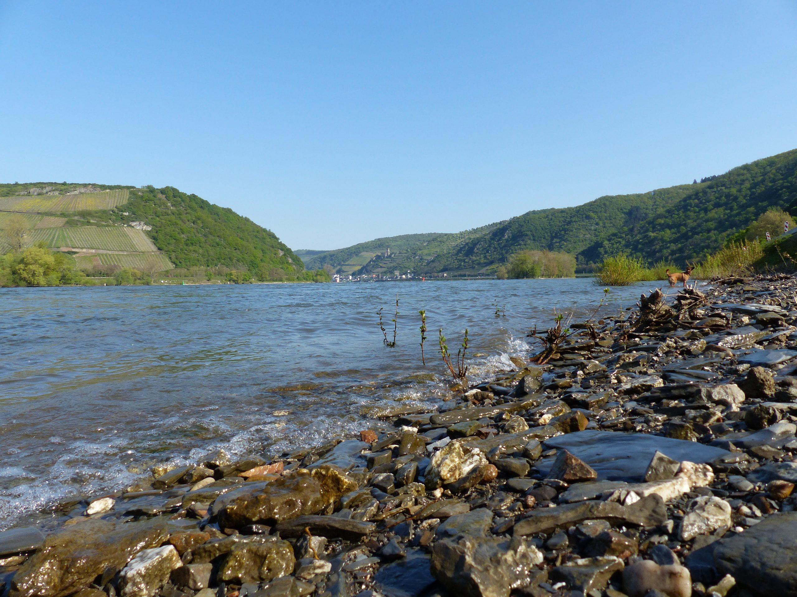 Top Unterkunft an der schönsten Etappe am Rheinsteig