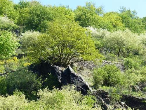 Impressionen Natur Landschaft Rheinsteig